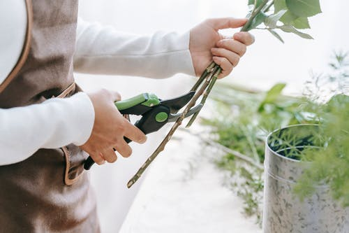 Side view of crop anonymous woman cutting verdant fresh stems of flowers on blurred background