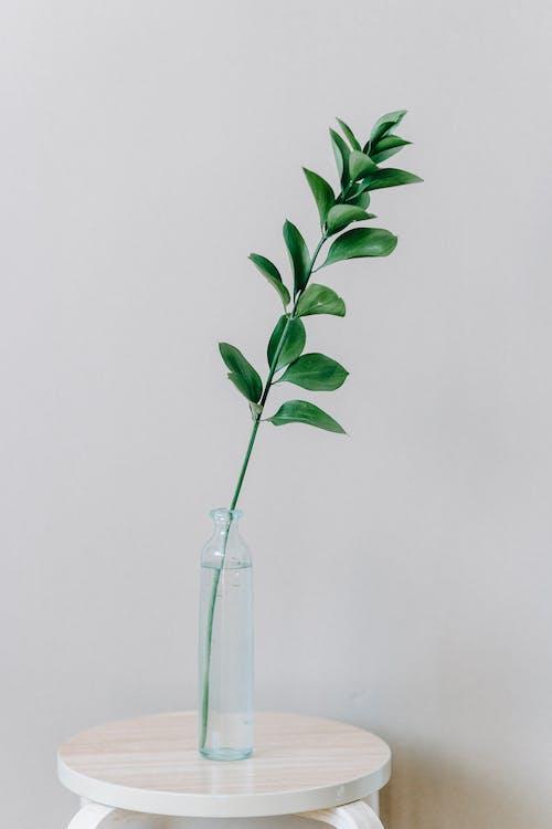 açık, açık renkli, aromatik içeren Ücretsiz stok fotoğraf