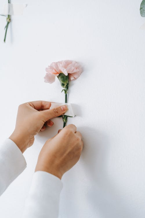 Anonymous decorator gluing pink flower carnation to wall