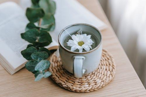 Imagine de stoc gratuită din acasă, alb, angiosperme