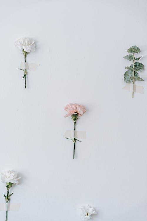 Fotos de stock gratuitas de adhesivo, amable, angiospermas