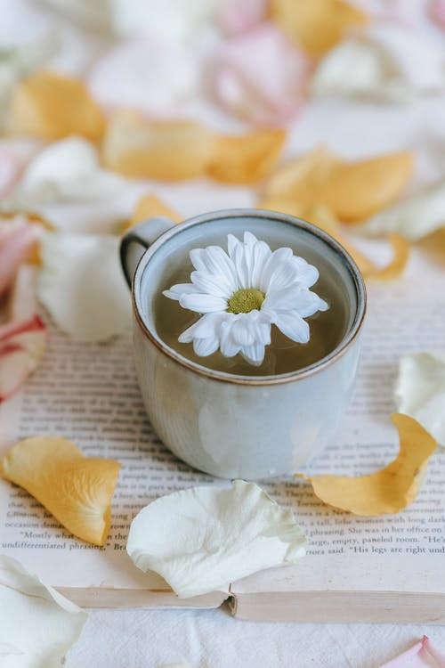 From above of blossoming white flower in cup of green hot drink on open textbook among rose petals