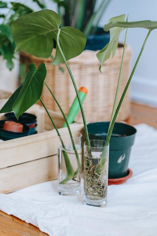 作文, 作曲, 單子葉植物 的 免費圖庫相片