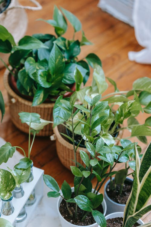 Assorted potted plants and sprouts on floor