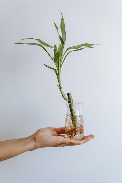 Fotos de stock gratuitas de agua, anónimo, árbol de serpiente