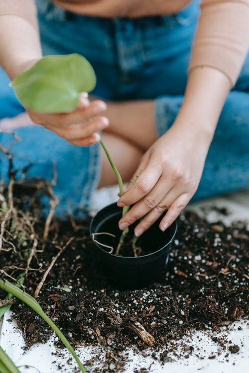 Woman planting green seedling into flowerpot