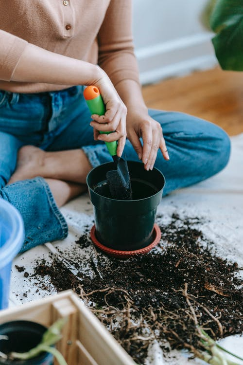 Woman with gardening trowel planting sprouts