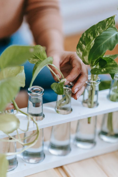 High angle of crop anonymous female gardener planting saplings in glass flasks placed in row in wooden container
