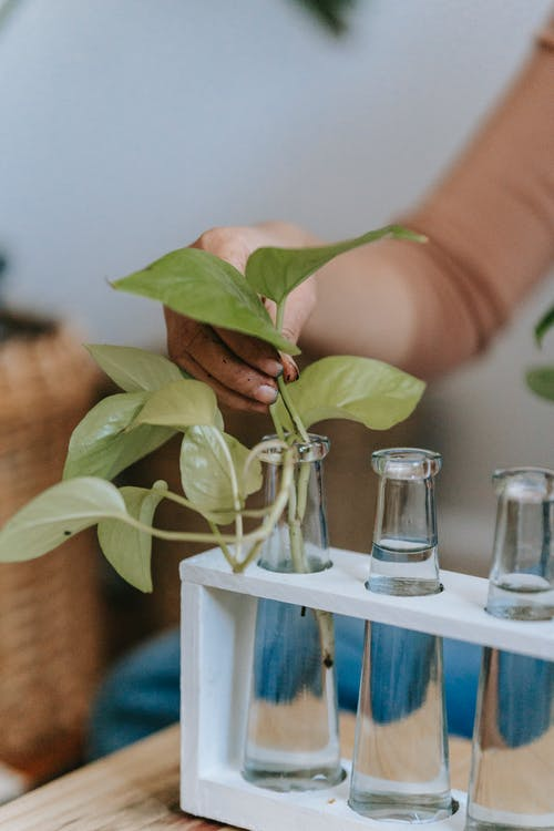 Woman planting sprout in transparent flask