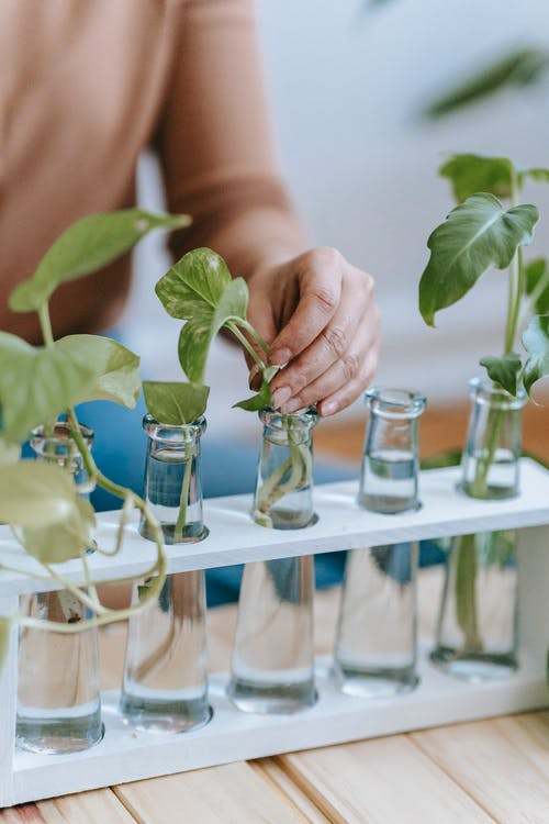 Crop anonymous female gardener sitting at table with row of glass bottles filled with water with green sprouts