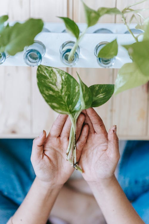 Woman holding sprouts in hands near bottles of plants