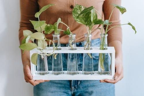 Ingyenes stockfotó a zárvatermők, araceae, aratás témában