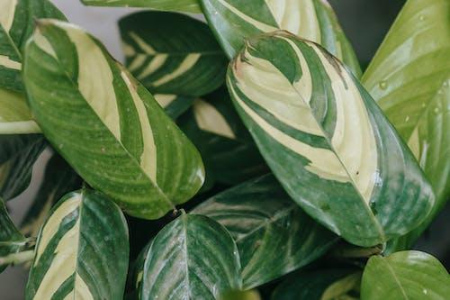 Ingyenes stockfotó a zárvatermők, beltéri, botanika témában