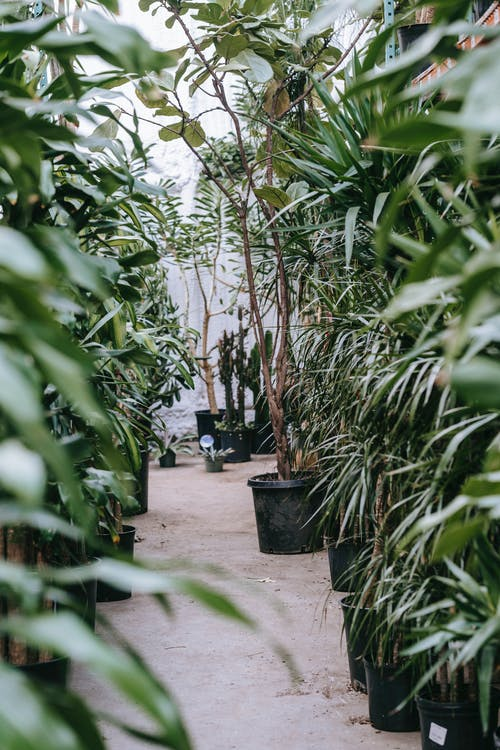 Green Leaf Plants on Gray Concrete Floor