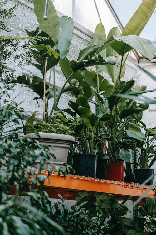 Assorted tropical plants with lush leaves in orangery
