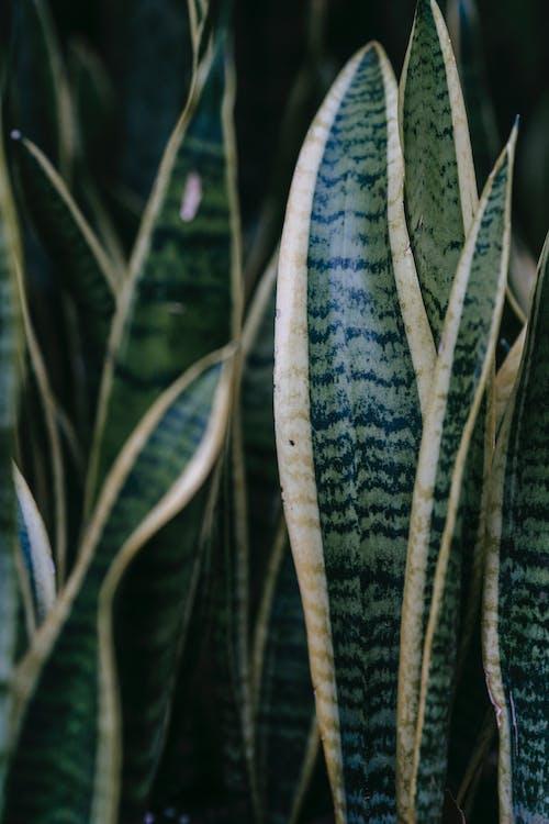 Fotobanka sbezplatnými fotkami na tému biela, botanika, čerstvý