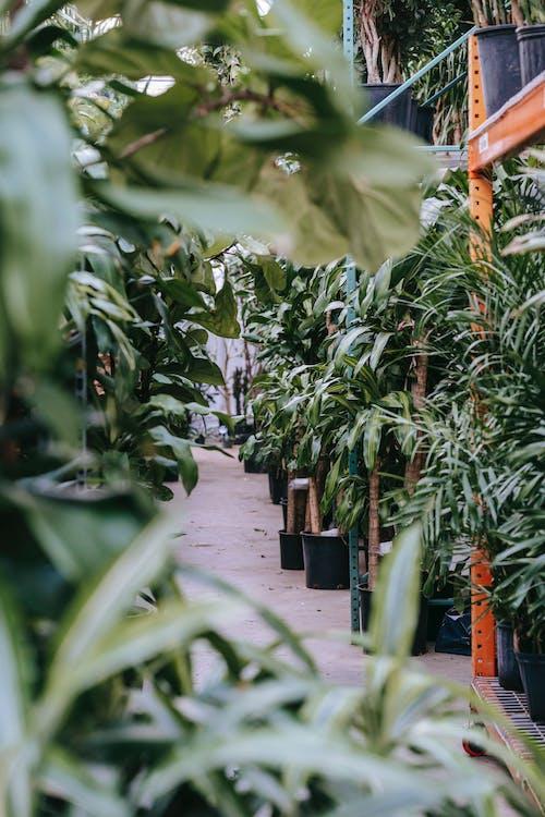 Foto stok gratis alami, bagian, bahan