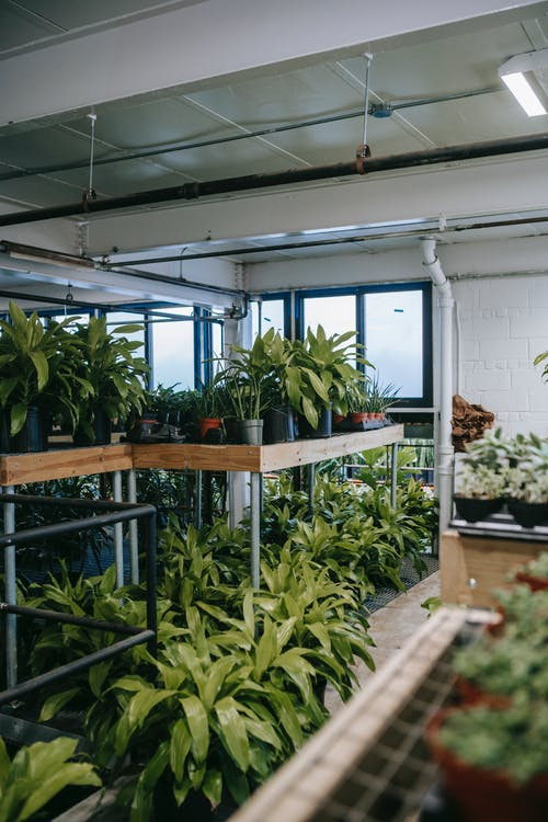 Potted green plants in greenhouse