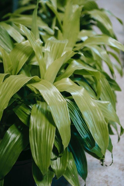 Gratis stockfoto met aanwijzen, blad, bladeren
