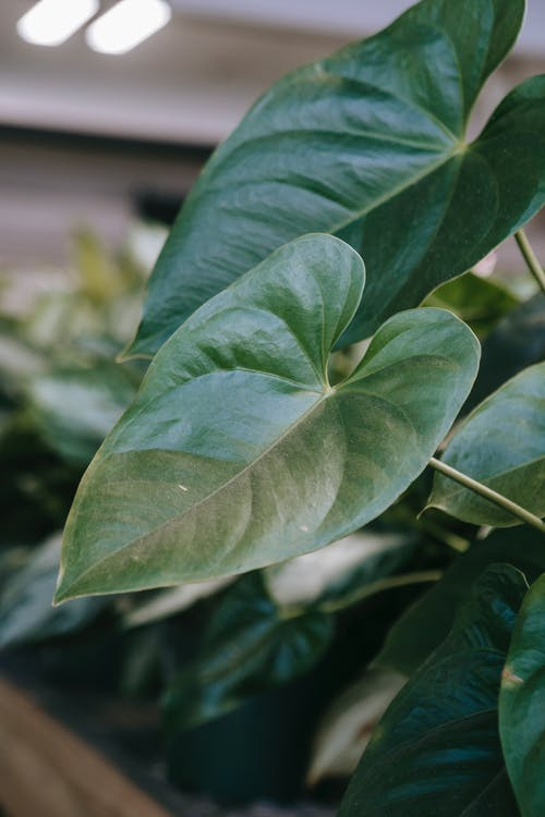 Green leaves of plant in garden