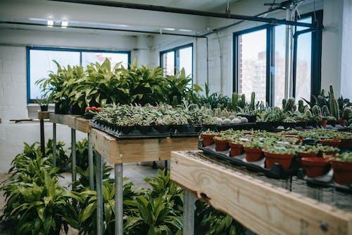 Various green plants in light room