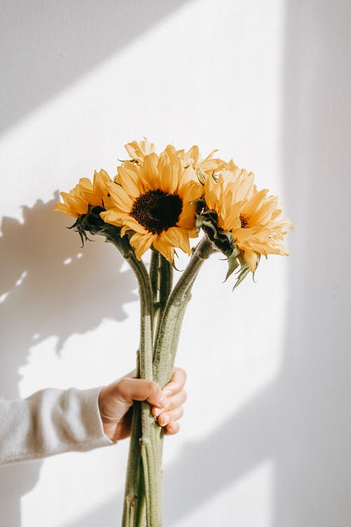 Person showing bouquet of sunflowers