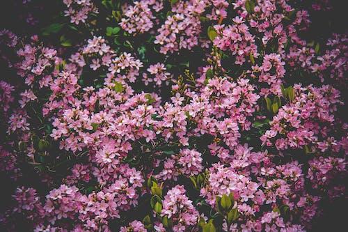 Pink Flower Field