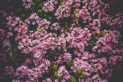 1000 interesting pink flowers photos pexels free stock photos pink flower field mightylinksfo