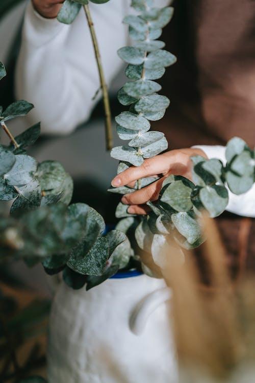 Female putting eucalyptus in ceramic vase