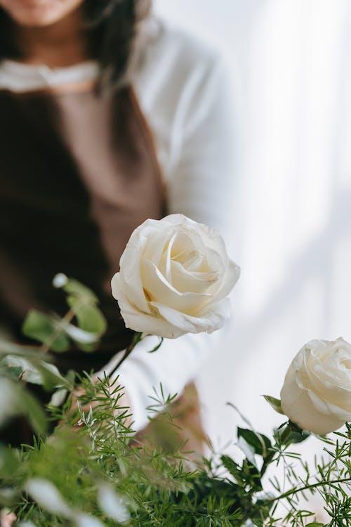 Foto stok gratis anggun, berbayang, bunga