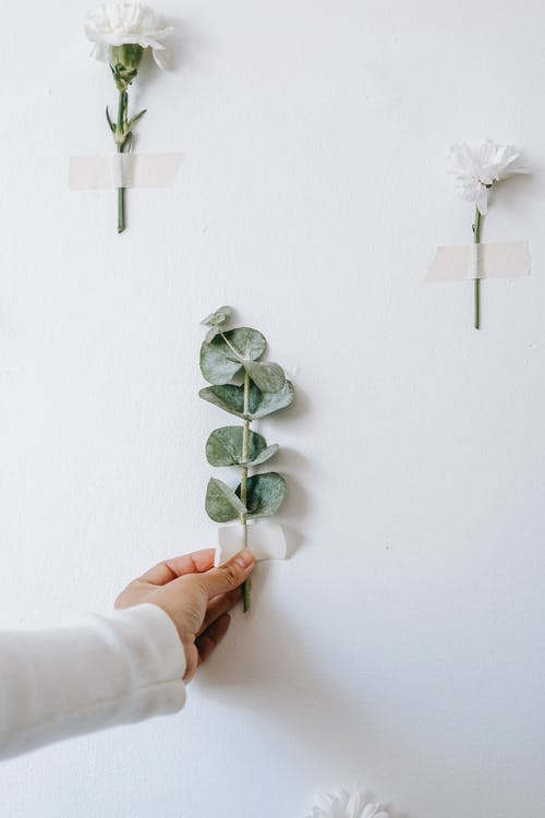 Crop florist attacking twig on wall