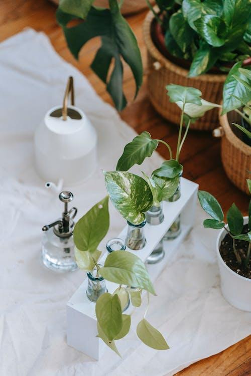 Foto stok gratis air, bejana, bunga