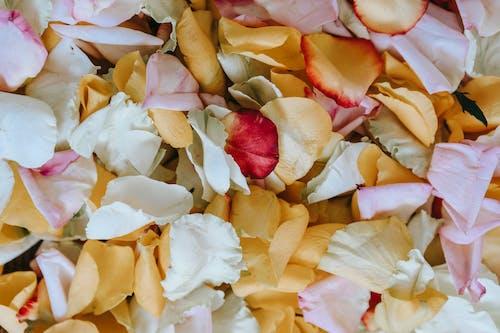 Foto stok gratis bunga, cinta, daun