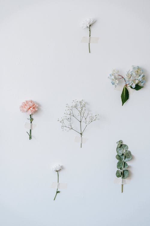 Foto stok gratis berbayang, bidang, bunga