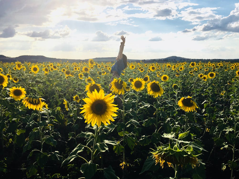 denní světlo, farma, flóra