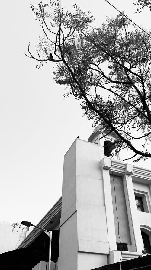Free stock photo of architecture, birds, black
