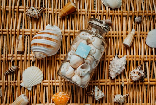 Different seashells from vacation on wicker mat