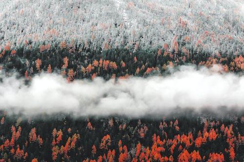 Kostnadsfri bild av Abraham Lincoln, åkermark, dagsljus, dimma