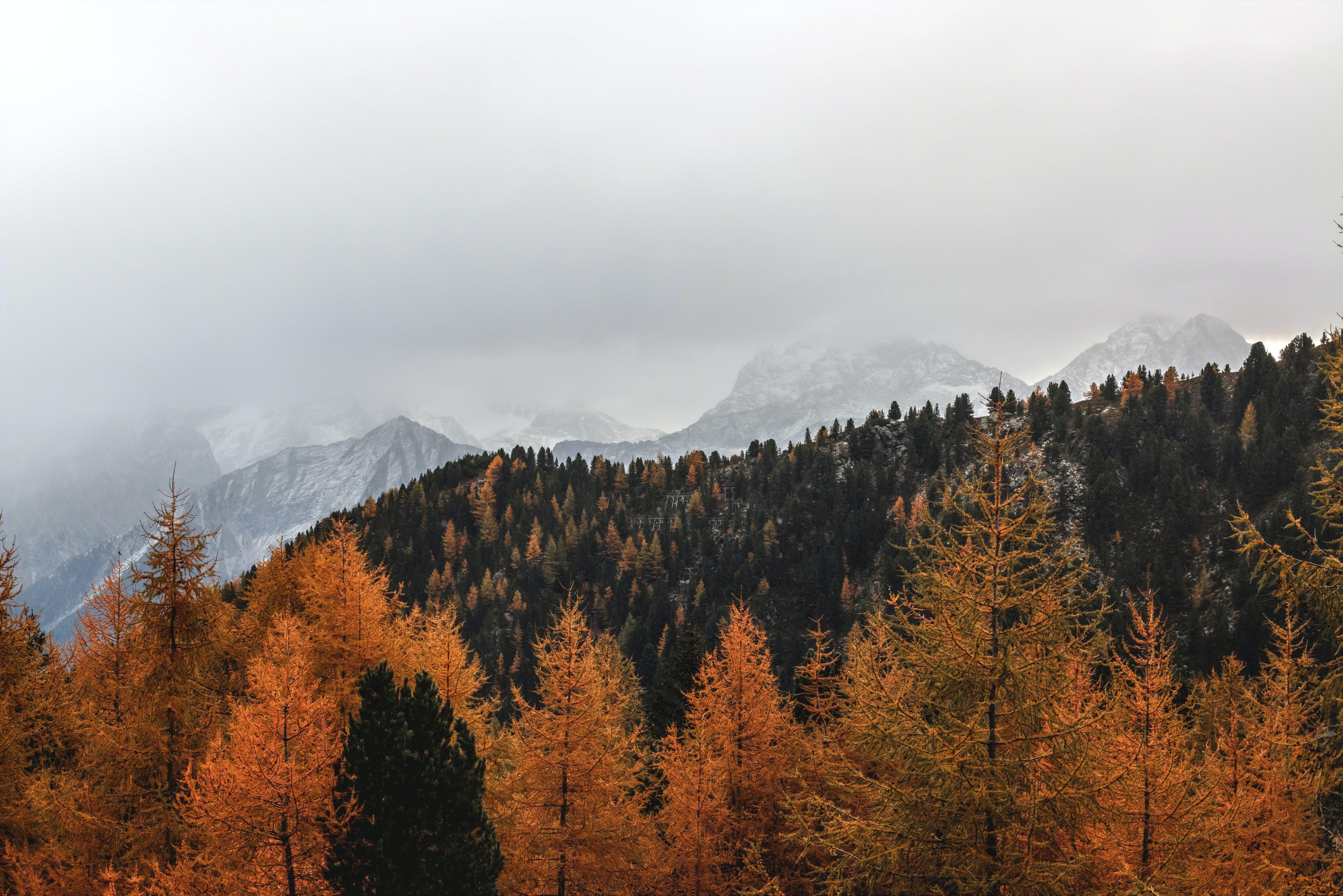 Gratis lagerfoto af bjerg, dagslys, dis, eventyr
