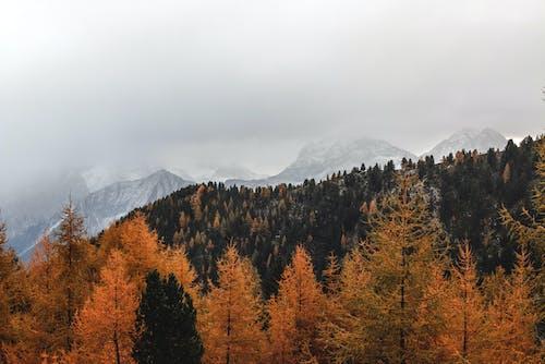 ağaçlar, çevre, dağ, doğa içeren Ücretsiz stok fotoğraf
