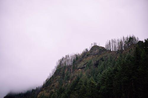 Green Trees on Mountain Under White Sky