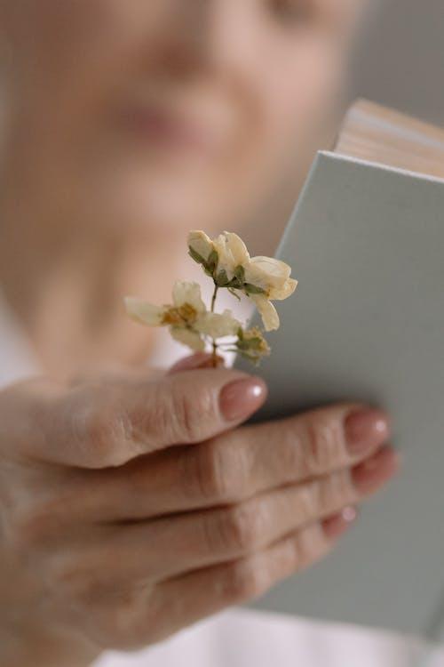 Fotos de stock gratuitas de adentro, enfoque superficial, flores