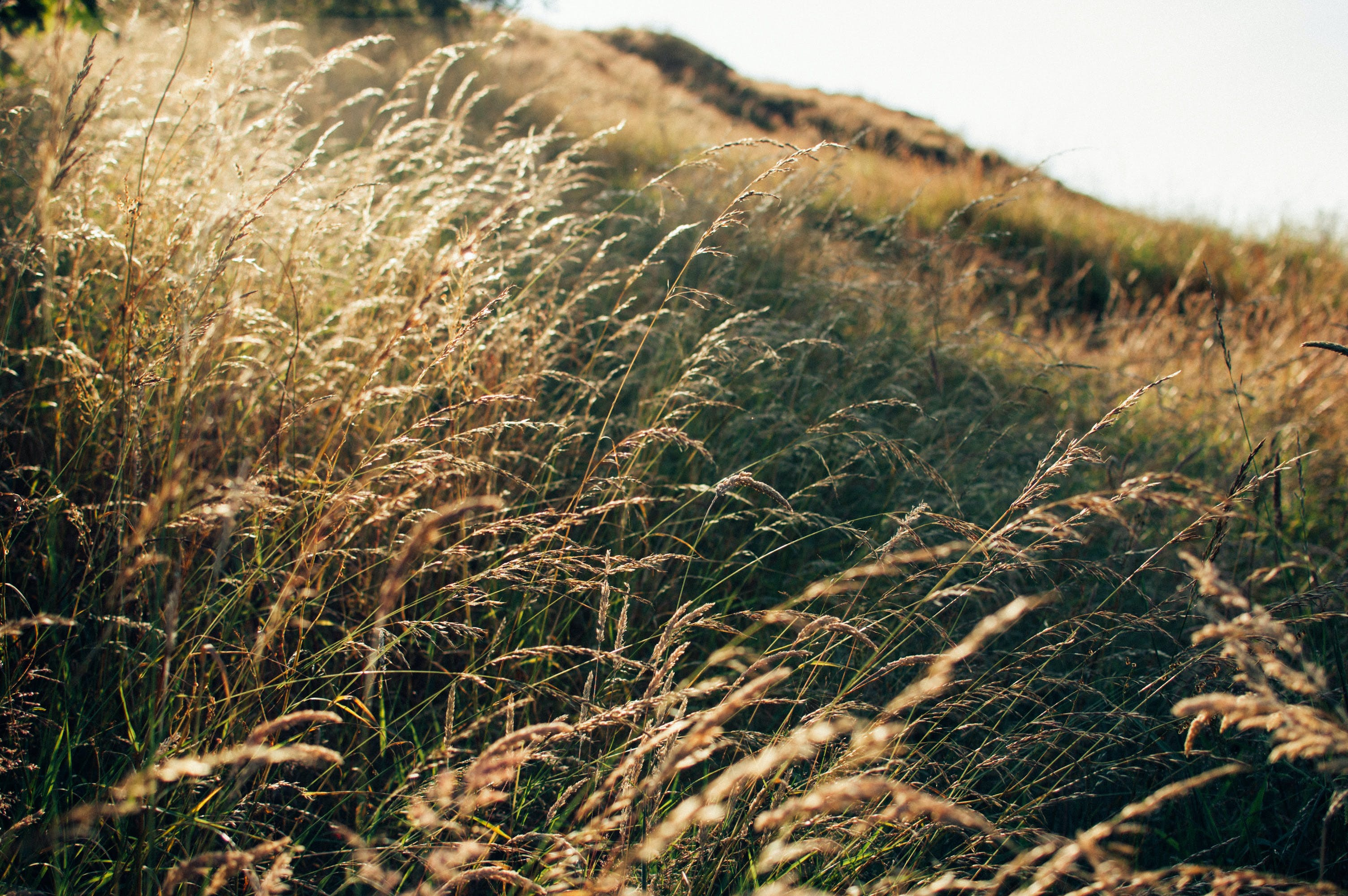 Free stock photo of summer, gold, golden hour, northwestisbest