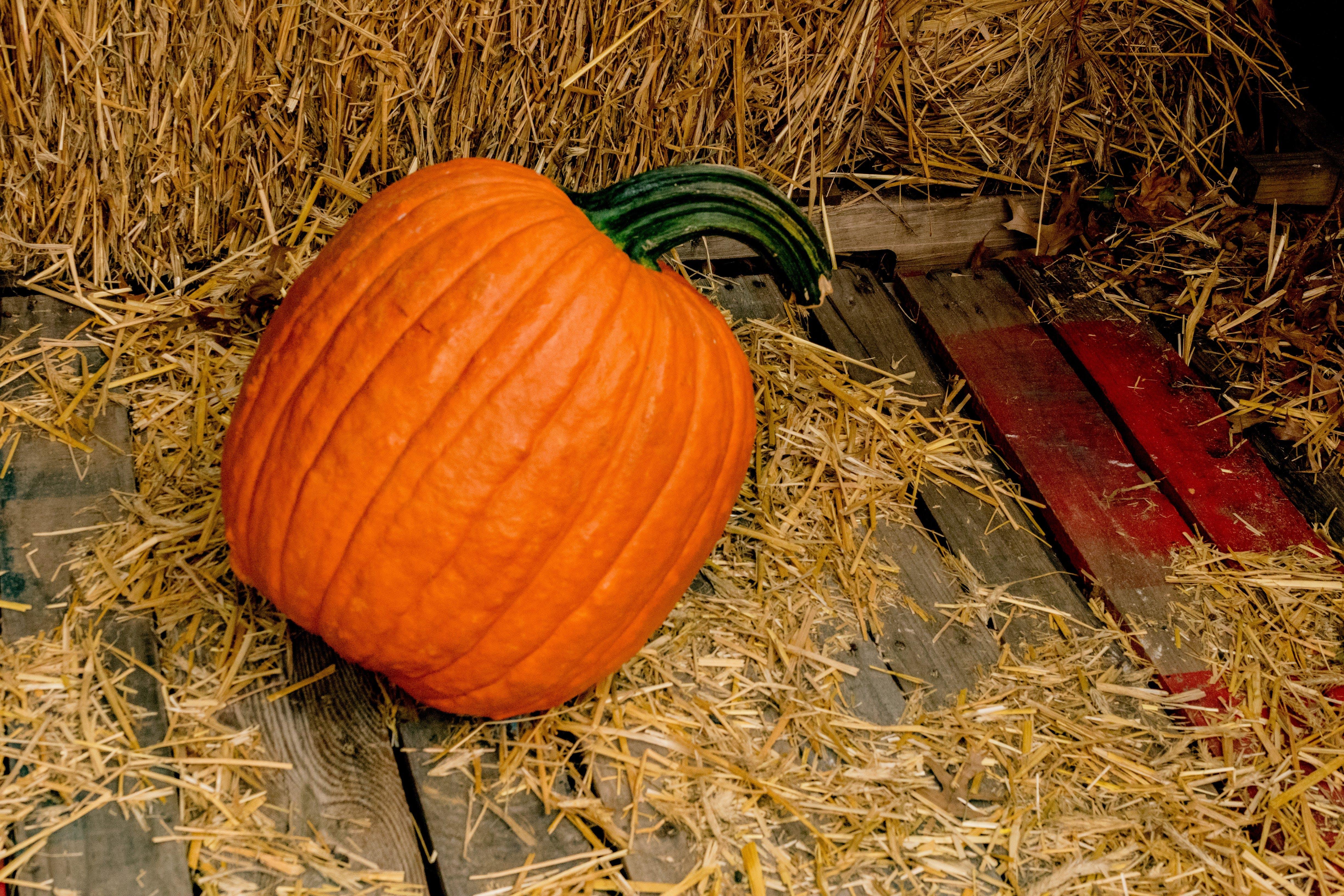 Free stock photo of autumn, fall, farm, food