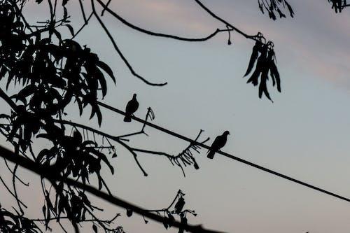 Free stock photo of bird, tre, trees