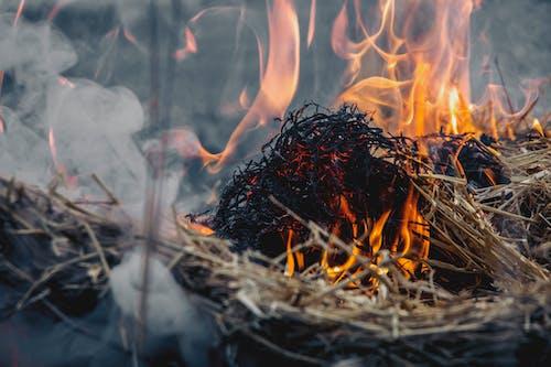 Dried Grass on Fire