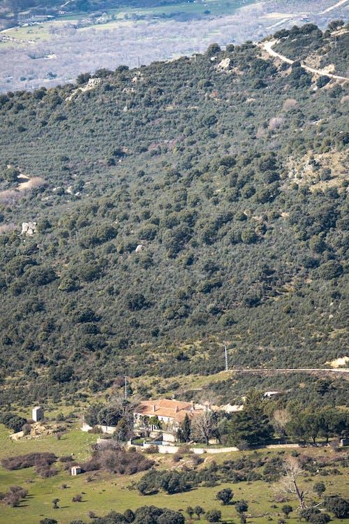 Immagine gratuita di alberi, cielo azzurro, maestoso