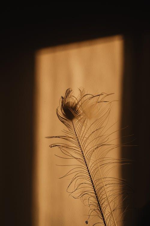 그림자, 깃털, 실루엣의 무료 스톡 사진