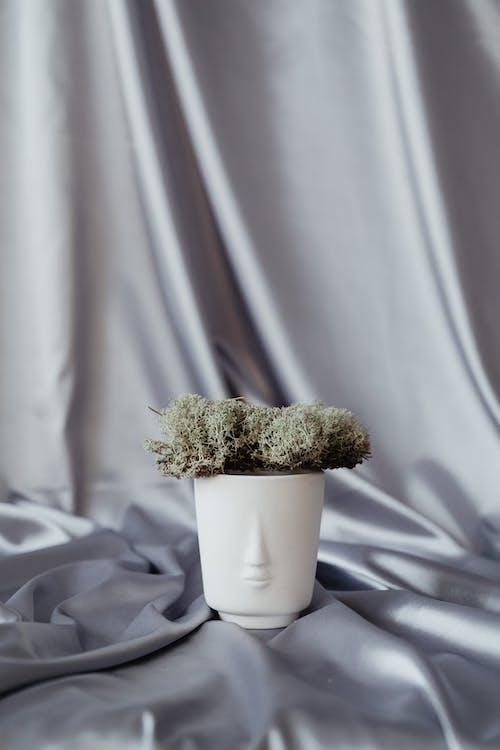 布, 絲綢, 苔蘚 的 免费素材图片