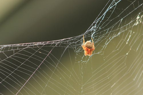 Free stock photo of spider, spider web